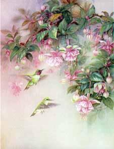 Hummingbirds with Fuchsia
