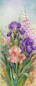 Purple Irises with Foxgloves