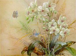 Phalaenopsis w/Blue Butterlies