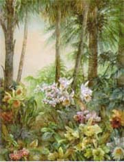 Orchid Oasis